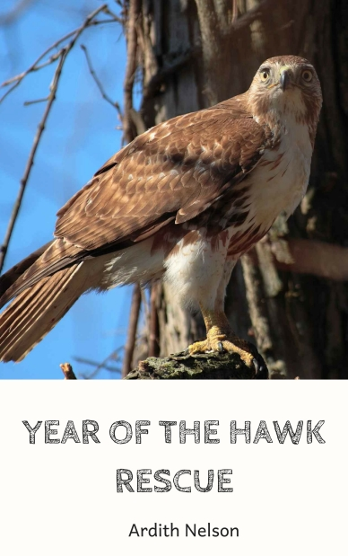 YEAR OF THE HAWK RESCUE